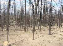 Global Warming Causes Wildfires and Vice Versa – Scientists Warn of Changes in Climate Vegetation and Possible Extinctions