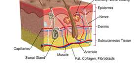 Type of Fat Cells Determines Diabetes Risk – Subcutaneous Fat Can Reduce Risk For Type-1 Diabetes – Belly Fat Less An Issue