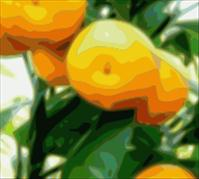Tangerines contain a Flavonoid that might protect against Type 2 Diabetes and Obesity