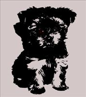 Small dog breed - BSN