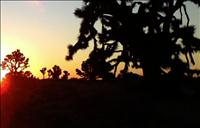Joshua Tree Sunset - BSN