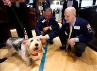 Thomas Kay and Chris Carella take a break from a busy morning of trading stocks to hang out with Pawl Griffin, Vice President of Canine Communications, Eukanuba Dog Foods who lent a paw to help ring the opening bell at the New York Stock Exchange on Thursday, December 20, 2012. credit: P&G/BUSINESS WIRE